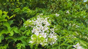 White flower in the park in the garden. Photography Stock Photography