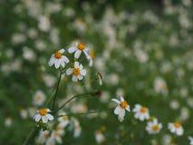 White flower. White flower in park stock photos