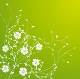 White flower pattern in green background Royalty Free Stock Image