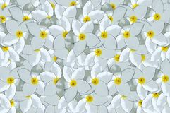 White flower pattern background Stock Images