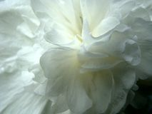 White flower petals. Relaxing colours of nature Stock Image