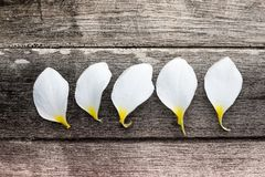 White flower petals. On wooden,Petals of plumeria Royalty Free Stock Photos