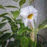 White flower. Portrait of single white flower Stock Images