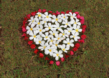 White flower and red flower are arranged heart shape on the grass Royalty Free Stock Images