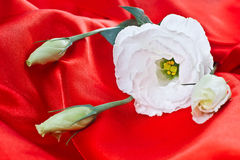 White flower on red satin Royalty Free Stock Photo