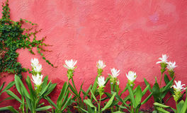 White flower and red wall background Stock Images