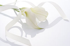 White flower and ribbon. Beautiful calla and ribbon on white background Royalty Free Stock Photo