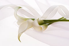 White flower and ribbon. Beautiful calla and ribbon on soft chiffon cloth Stock Photography