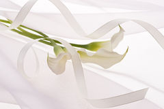 White flower and ribbon Royalty Free Stock Images