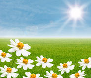 White flower with ricefield Stock Images