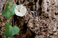 White flower on rock. Background Stock Photos