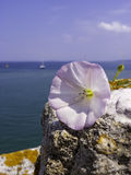 White flower in the rock. At sea background Stock Image