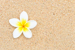 White flower on sand beach. Close up top view of one white flower on sand beach Stock Photos