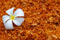 White flower on the sawdust Stock Photos