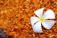 White flower on the sawdust Royalty Free Stock Image