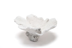 White Flower-Shaped Coral Trinket on a White Background Stock Photography