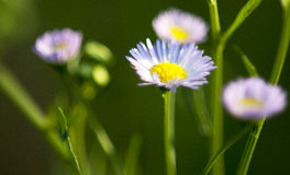 White Flower. In sharp focus against blurry background stock images