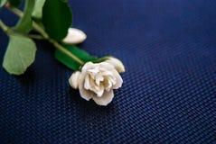 White flower. Single white flower on dark ground Royalty Free Stock Images