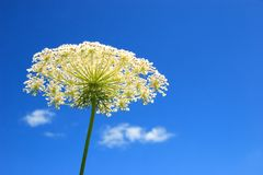 White flower, sky and clouds Royalty Free Stock Photography