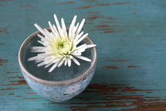 White flower in small cup Stock Images