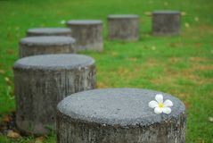 White flower on the stone seat. Beautiful garden stock photography