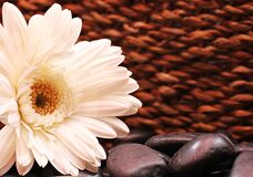 White flower with stones Royalty Free Stock Photo