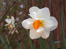 White flower. In sunny terrace. Bees food stock photo