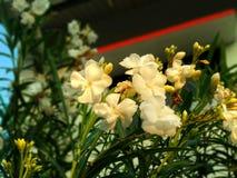 White flower sunset light royalty free stock photography