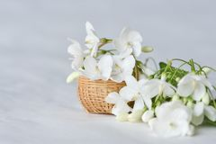 White flower in tiny bamboo basket. Wrightia religiosa flowers in a miniature bamboo basket royalty free stock photo