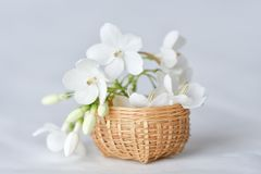 White flower in tiny bamboo basket. Wrightia religiosa flowers in a miniature bamboo basket royalty free stock images
