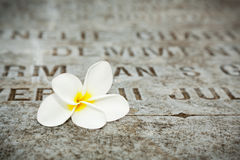 White Flower on tombstones in old cemetery stock photo
