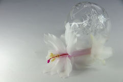 White flower and transparent bauble Stock Photo