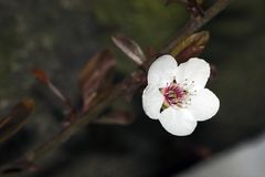 White flower on tree Stock Image