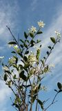 The white flower under Blue sky royalty free stock photography