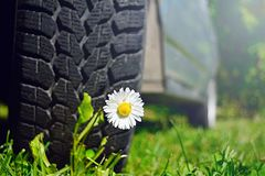 White flower under the wheel of the car. royalty free stock photography