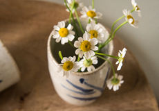 White flower in a vase Royalty Free Stock Photography
