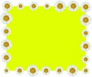 White Flower Vine Border Yellow Background Stock Photography