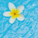 White flower on water Royalty Free Stock Images