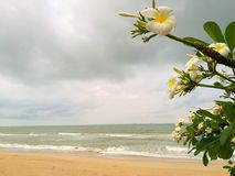 White flower. Wave Of Ocean On Sandy Beach and sunset light afte Stock Images