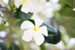 White flower. Branch close up Stock Images
