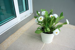 White flower in a white pot Stock Photos