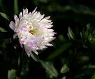 White flower. In the wild,  white flowers are blooming Royalty Free Stock Photos