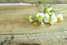 White flower on wood background Stock Image