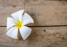 White flower on wood floors Royalty Free Stock Image