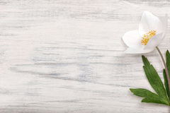 White flower on wooden background. Royalty Free Stock Image
