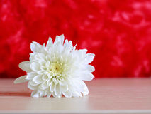 White flower on wooden table and red background royalty free stock image
