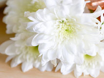 White flower on wooden table. Selective focus Stock Images