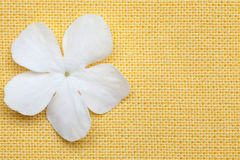 White flower in yellow background Stock Photography
