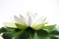 White flower of zen. And meditation or decoration Royalty Free Stock Photos
