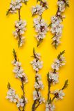 White flowering apricot branches on a yellow background, vertically stock images